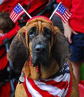 July 4th Hound Dog